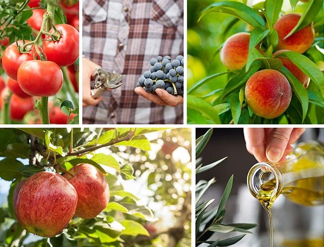 Fotografije voća i povrća